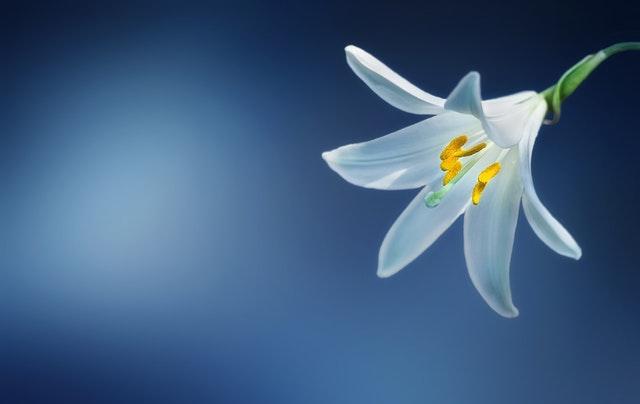 発揮するオリジナリティの種類によって早咲き、遅咲きの二つのタイプがある。